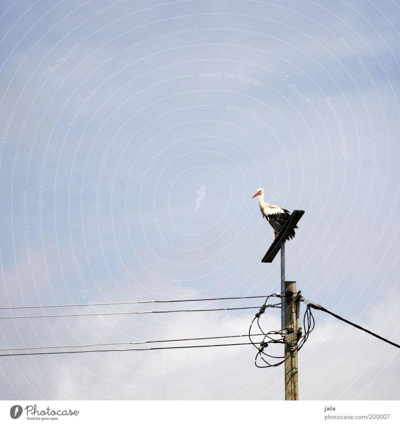 klapper klapper klapperstorch Himmel Tier Vogel Storch 1 stehen Aussicht Strommast Hochspannungsleitung Fabelwesen Kinderwunsch Farbfoto Außenaufnahme