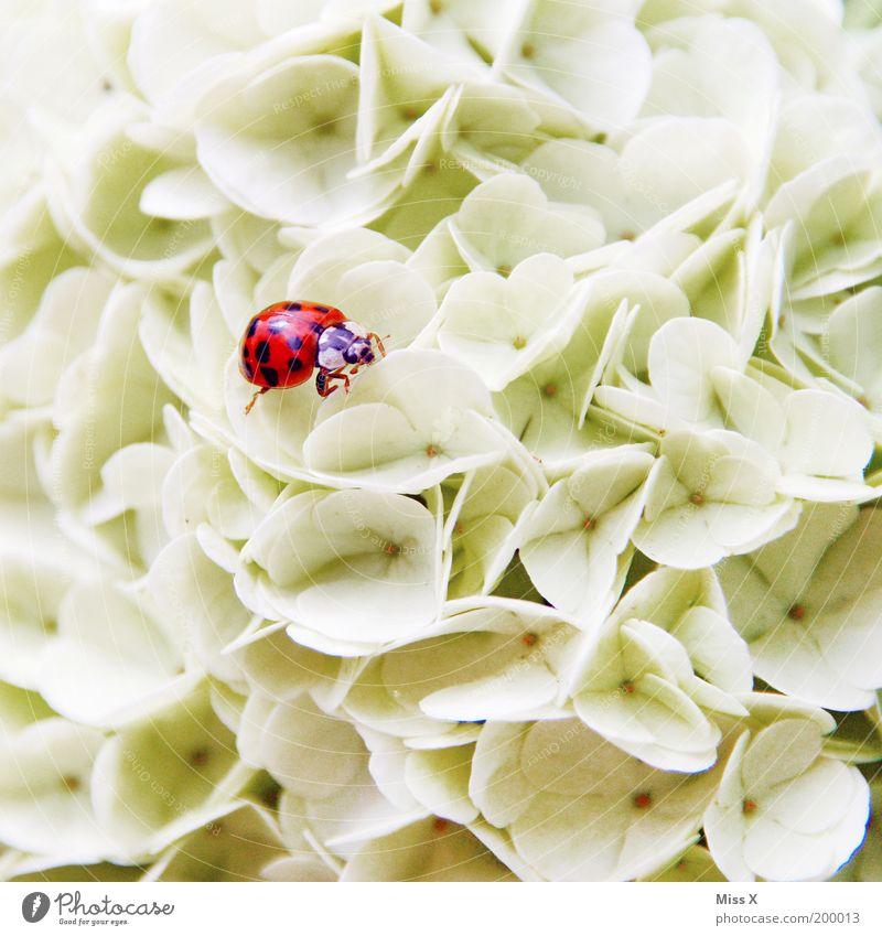Blütenbett Natur Blume Pflanze rot Sommer Tier Frühling Garten Glück Park klein Kitsch Klettern Punkt Blühend
