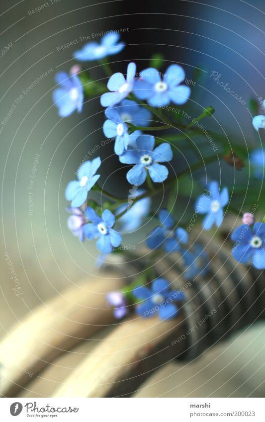 Frühling lässt sein blaues Band... Natur Pflanze Sommer Blume Vergißmeinnicht Unschärfe Blüte Korb zart Stimmung Farbfoto Außenaufnahme Freundschaft