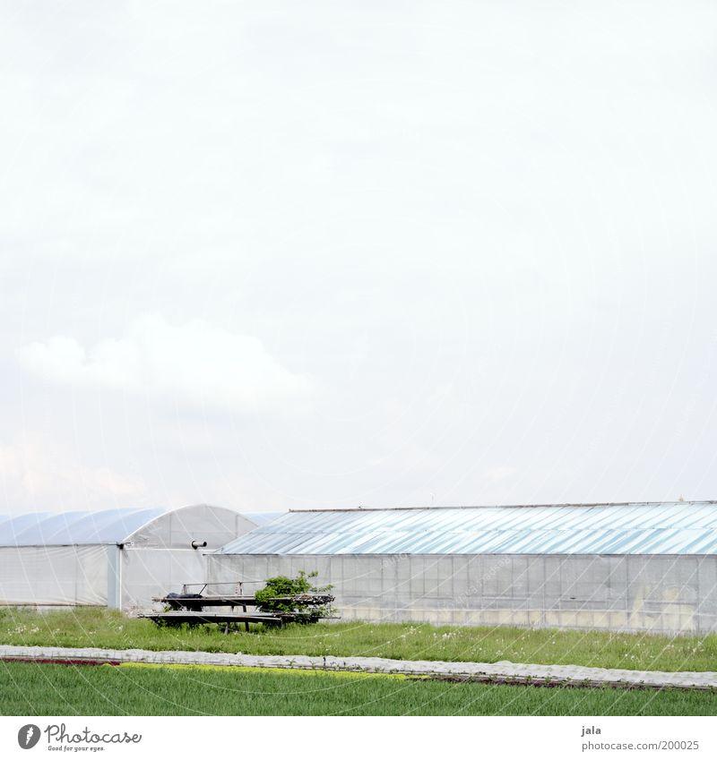 Landwirtschaft Arbeit & Erwerbstätigkeit Wirtschaft Forstwirtschaft Natur Pflanze Grünpflanze Nutzpflanze grün Agrarprodukt Gewächshaus Himmel Ackerbau Farbfoto