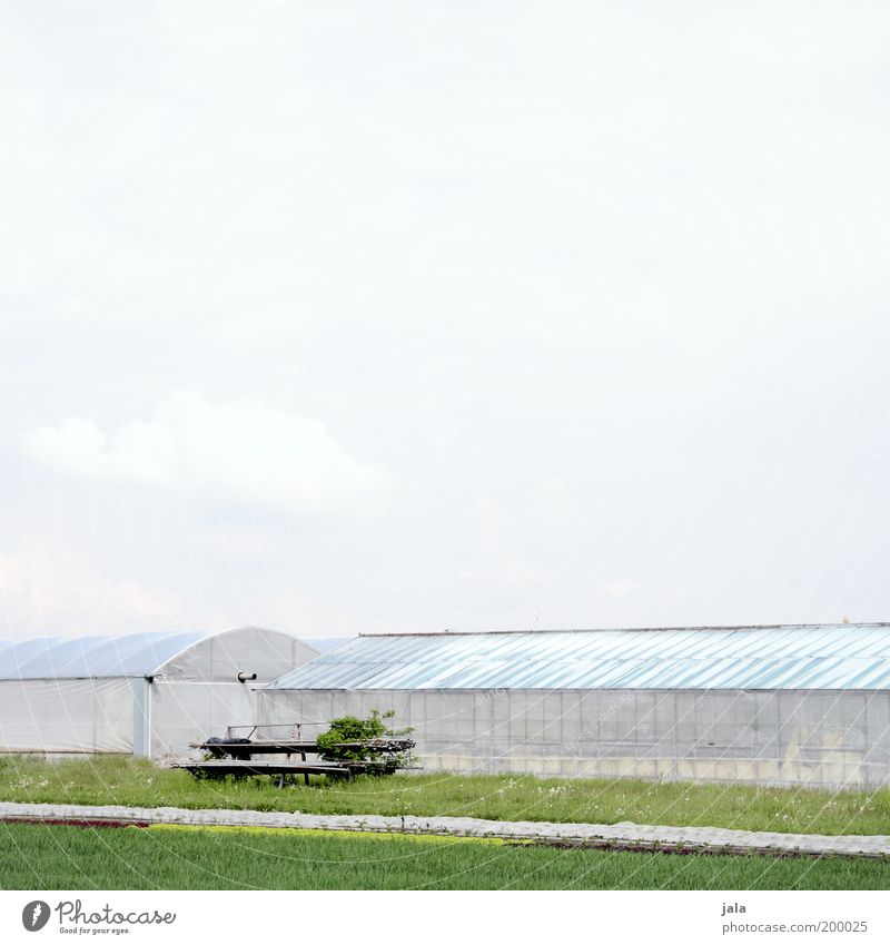Landwirtschaft Natur Himmel grün Pflanze Arbeit & Erwerbstätigkeit Landwirtschaft Wirtschaft Ackerbau Forstwirtschaft Grünpflanze Gewächshaus Nutzpflanze Gärtnerei Agrarprodukt