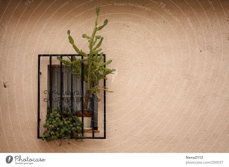 Freiheitssüchtig... Fenster Gitter Fensterbrett Fenstersims Pflanze Blumentopf Kaktus Süden südländisch Spanien Südfrankreich Italien Fassade Garten Sicherheit