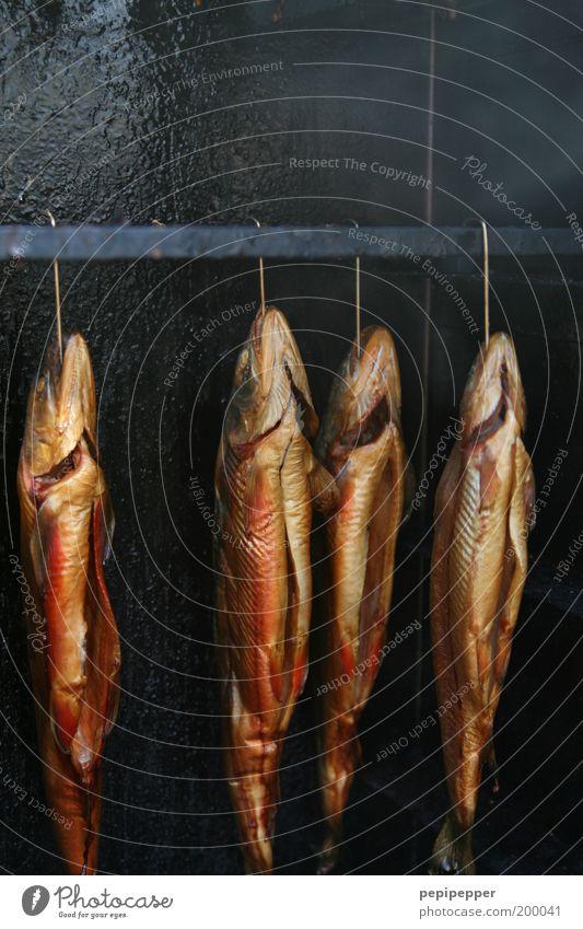 ausgenommen schmackhaft Tier Ernährung Lebensmittel braun gold Fisch Rauch lecker hängen saftig Haken 4 Fischmarkt geräuchert
