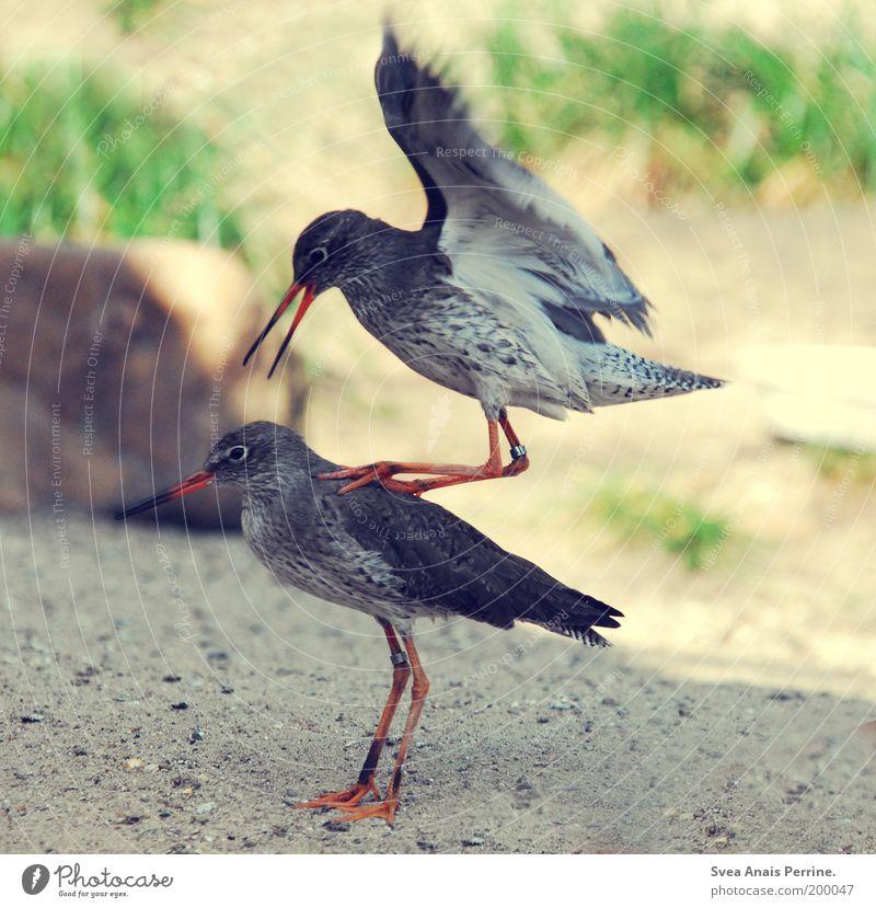 force attack Natur Tier Umwelt Bewegung Sand springen Stein Vogel Tierpaar wild außergewöhnlich Flügel weich Schönes Wetter Zoo Krieg