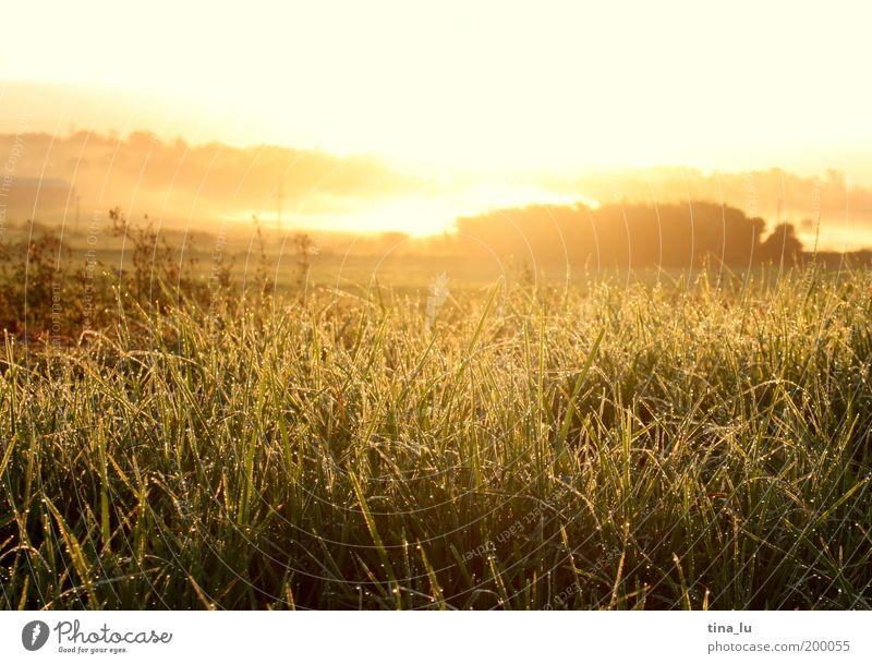sunrise in south africa Himmel Natur Pflanze Sonne Sommer Ferien & Urlaub & Reisen Wolken Ferne gelb Wiese Freiheit Landschaft Gras Glück braun Zufriedenheit