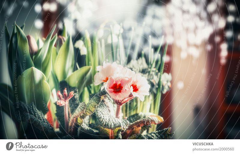 Hübsche Blumen am Bokeh Hintergrund Stil Design Sommer Wohnung Innenarchitektur Dekoration & Verzierung Natur Pflanze Frühling Tulpe Blatt Blüte Blumenstrauß