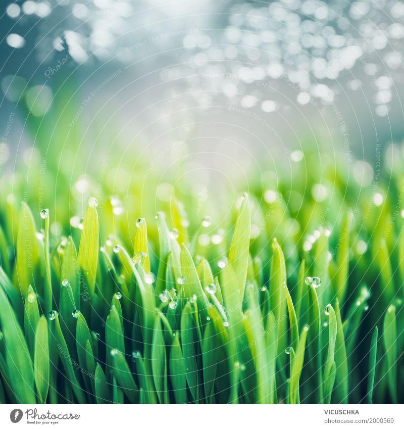 Frisches grünes Gras mit Tautropfen Natur Pflanze Sommer Landschaft Umwelt Lifestyle Frühling Wiese Hintergrundbild Garten Design Park Feld Wassertropfen