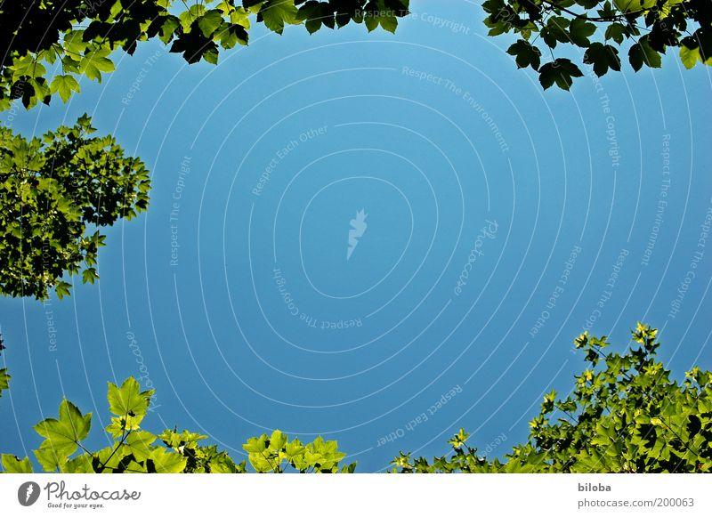 Der Sommer kann kommen Himmel Natur blau grün Baum Pflanze Sommer Blatt Umwelt Landschaft oben Gefühle Frühling Luft Park Stimmung