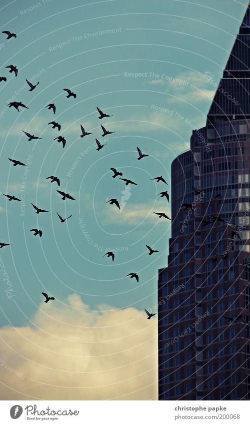 The swarm Freiheit Sightseeing Städtereise Frankfurt am Main Hochhaus Turm Gebäude Architektur Fassade Vogel Schwarm gruselig gleich Zusammenhalt Vogelschwarm