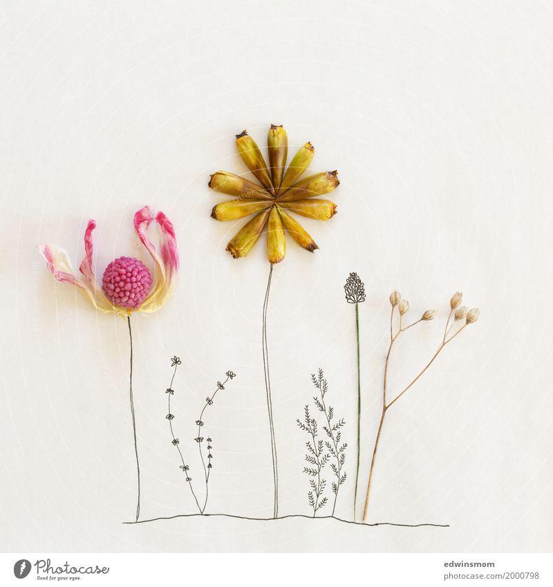 Spring is here Natur Pflanze schön weiß gelb Blüte Frühling natürlich rosa hell wild Freizeit & Hobby leuchten Wachstum Dekoration & Verzierung Kreativität