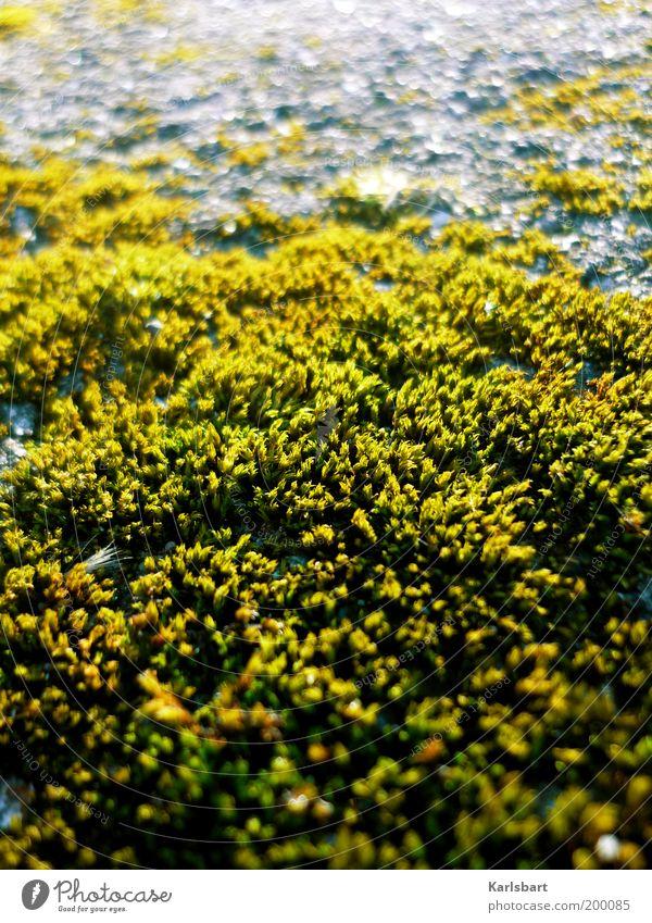 moos. Natur schön grün Pflanze ruhig gelb Leben grau Stein Umwelt Wachstum natürlich Moos Oberfläche Grünpflanze abstrakt