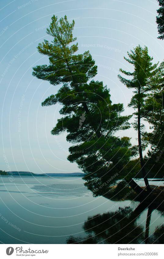Entspannen Natur Wasser Baum Frühling See Landschaft Kraft Umwelt Romantik Schutz Kanada Seeufer Neigung