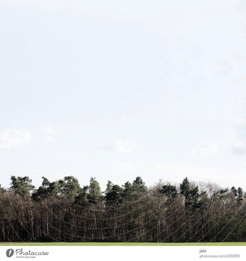 Ökoton Natur Landschaft Himmel Pflanze Baum Gras Grünpflanze Wiese Wald Unendlichkeit blau grün Verantwortung Waldrand Sauerstoff Umweltschutz Farbfoto