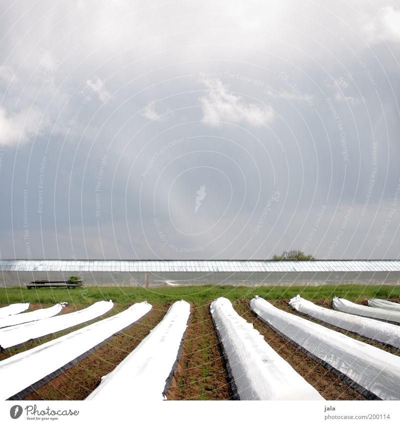 Spargelacker Natur Himmel Pflanze Wolken Arbeit & Erwerbstätigkeit Frühling Landschaft Feld Gemüse Reihe Ackerbau nachhaltig Gartenarbeit Grünpflanze Spargel Gewächshaus