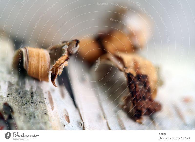 Aufreißen Natur weiß Tod Holz grau braun verfaulen fest Verfall Baumrinde abblättern Baumstamm