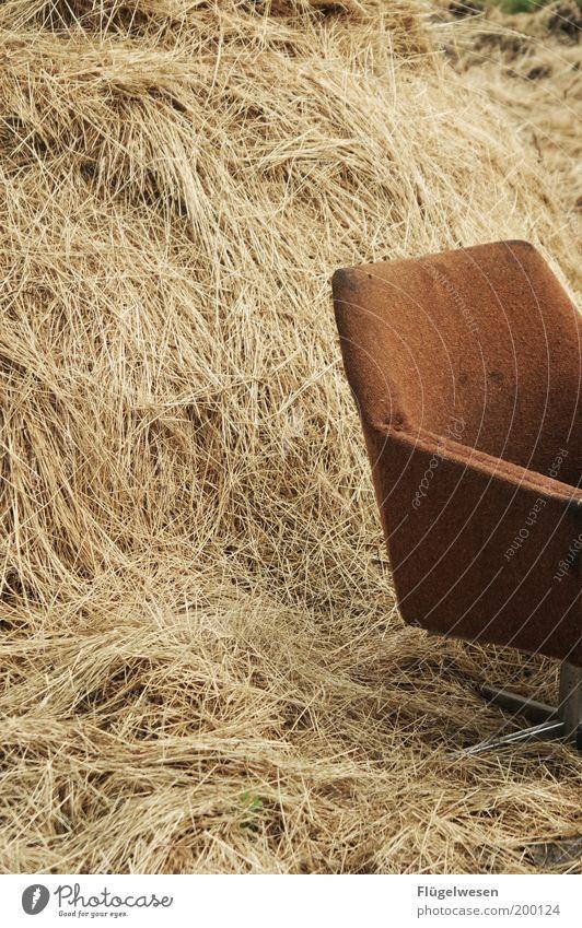 Büro vom Strohmann Erholung Kunst Freizeit & Hobby Kraft dreckig Lifestyle Pause Häusliches Leben Stuhl Beruf Landwirtschaft Bauernhof Wirtschaft kuschlig