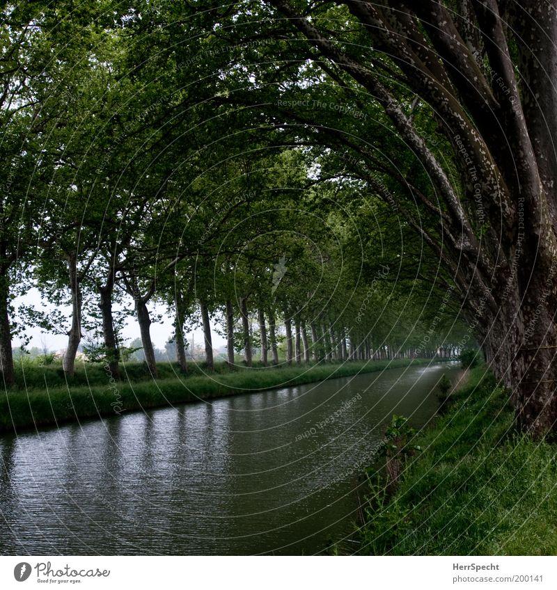 Canal du Midi Natur Wasser Baum grün Pflanze Sommer ruhig Frühling Landschaft Reihe Flussufer Fluss Kanal Low Key Lichterscheinung Binnenschifffahrt
