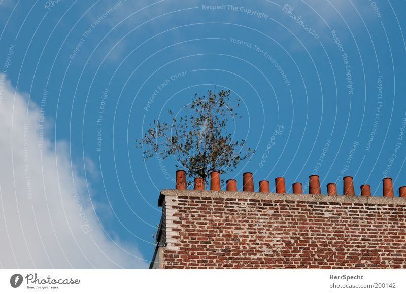 Kaminbaum Himmel weiß Baum grün blau Wolken Leben Wand Mauer braun lustig einzigartig Bauwerk aufwärts Schornstein streben
