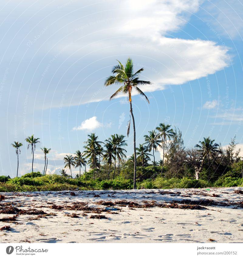 Diani Beach Ferien & Urlaub & Reisen Natur Sand Himmel Wolken Schönes Wetter exotisch Palme Küste Strand Kenia Afrika Wärme Idylle Fußspur Algen tropisch