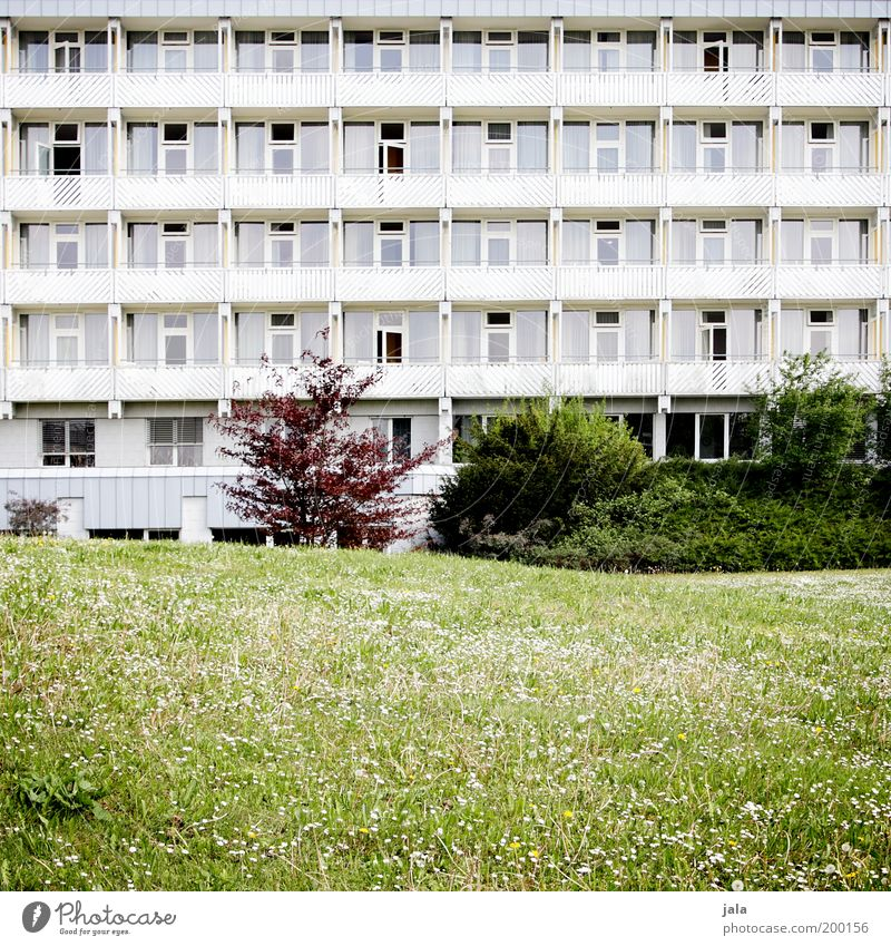 naherholungsgebiet Pflanze Gras Sträucher Grünpflanze Garten Park Wiese Haus Gebäude Architektur Fassade Balkon Frühlingsgefühle Farbfoto Außenaufnahme