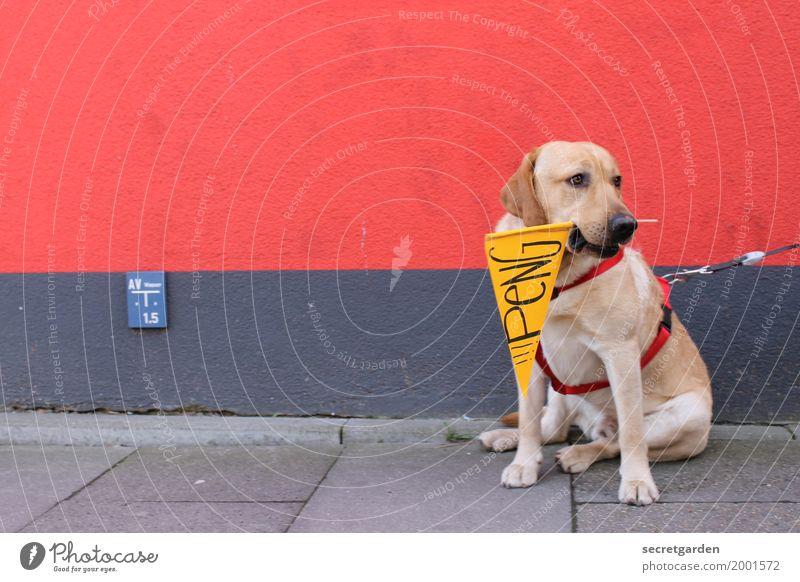 Artiges Warten auf den KNALL. Hund rot Tier Wand Mauer grau braun Zufriedenheit Schriftzeichen Schilder & Markierungen sitzen warten Hinweisschild Beton Zeichen Pause