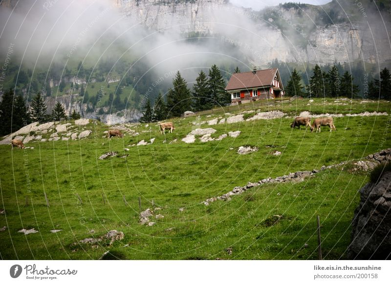 Postkarte aus dem Appenzell: 1,10€ grün schön Erholung Wiese Berge u. Gebirge Landschaft Gras Glück Zufriedenheit Nebel Felsen Fröhlichkeit ästhetisch Schutz