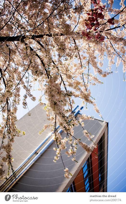 NATURE vs. ARCHITECTURE Umwelt Natur Landschaft Himmel Frühling Schönes Wetter Pflanze Baum Blüte Park Menschenleer Haus Gebäude Architektur Fenster Blühend