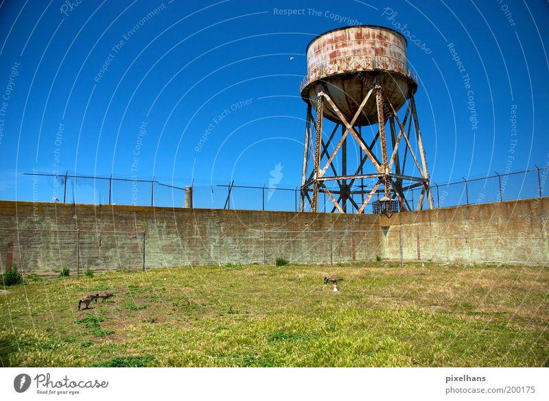neulich im Garten... Landschaft Himmel Wolkenloser Himmel Sommer Gras Wiese Alcatraz San Francisco Kalifornien USA Menschenleer Wasserturm Mauer Wand Zaun Rost