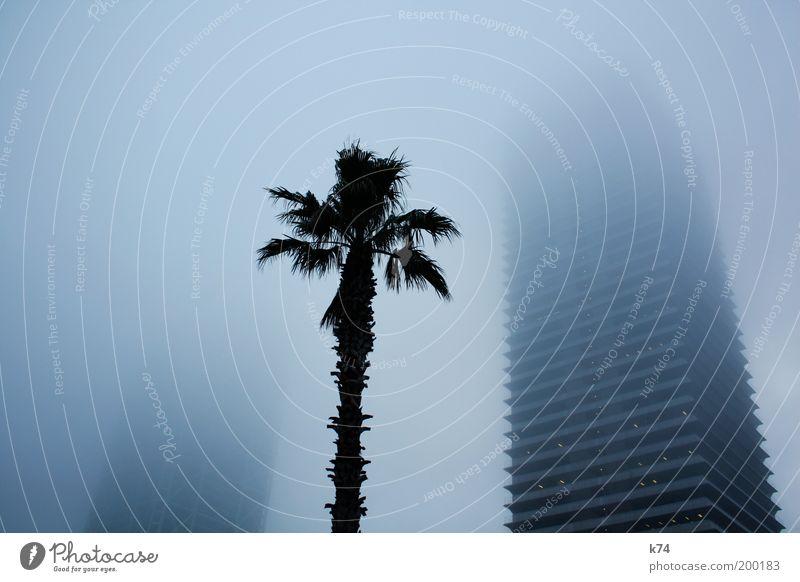 towers, fog and palm tree Farbfoto Gedeckte Farben Außenaufnahme Nebel Stadt Skyline Hochhaus Bauwerk Gebäude Architektur bedrohlich geheimnisvoll groß hoch