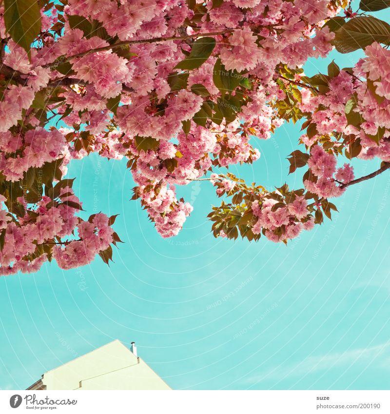 Poesie Spaziergang Städtereise Umwelt Natur Himmel Frühling Sommer Schönes Wetter Pflanze Baum Sträucher Blüte Ast Zweig Blütenblatt Park Haus Fassade Blühend