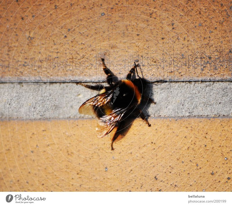 Chill-out-Zone Natur schön schwarz Tier Haus Erholung Wand Umwelt Flügel Pause Insekt Schönes Wetter dick Fuge Hummel Gebäude