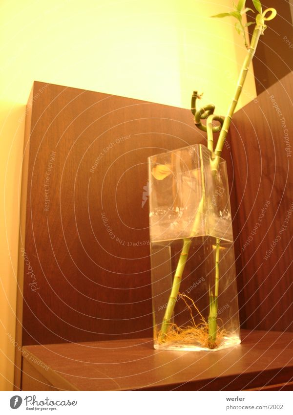 asia_bamboo Physik braun gelb Vase Café Pflanze Häusliches Leben Bambusrohr Wärme Perspektive Glas modern living