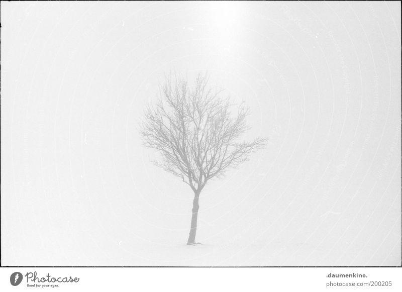 arbre. Baum Ast Zweig Natur Leben Tod verwundbar einzigartig jung unsicher gewachsen Strukturen & Formen Nebel einzeln