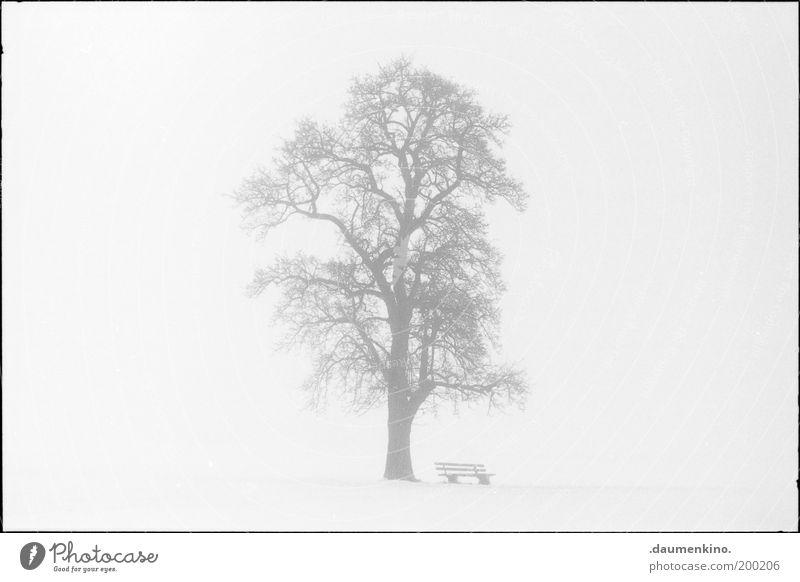 arbre.. Natur Baum Leben Holz Kraft Nebel Macht Bank Ast einzigartig stark Respekt Zweig einzeln selbstbewußt gewachsen