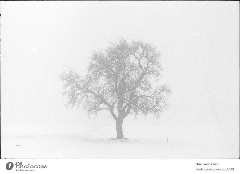 arbre.... Natur Baum Leben Kraft Nebel Ast einzigartig stark Respekt Zweig einzeln selbstbewußt gewachsen