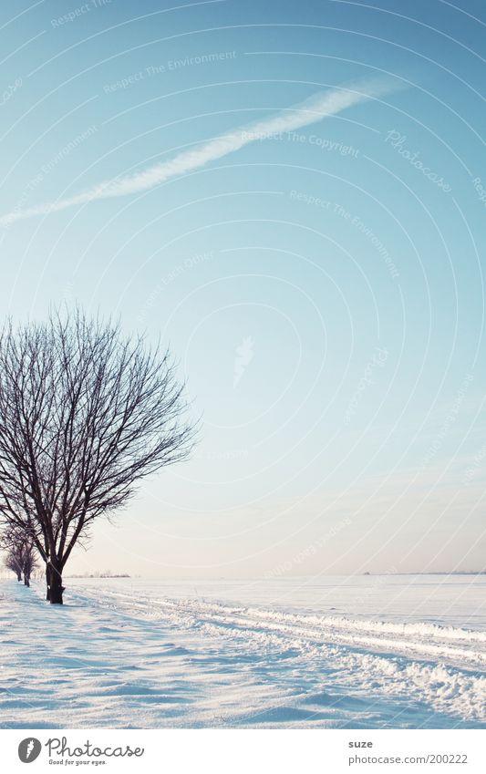 Randstück Umwelt Natur Landschaft Urelemente Luft Himmel Wolkenloser Himmel Horizont Winter Klima Schönes Wetter Schnee Baum Wege & Pfade ästhetisch hell kalt