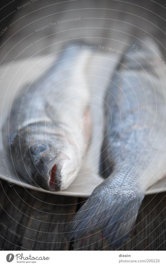 Fisch zum Frühstück, Baby! blau Tier Tod Ernährung kalt Lebensmittel grau liegen Fisch Tiergesicht Appetit & Hunger Teller Bioprodukte Maul Forelle Grillsaison