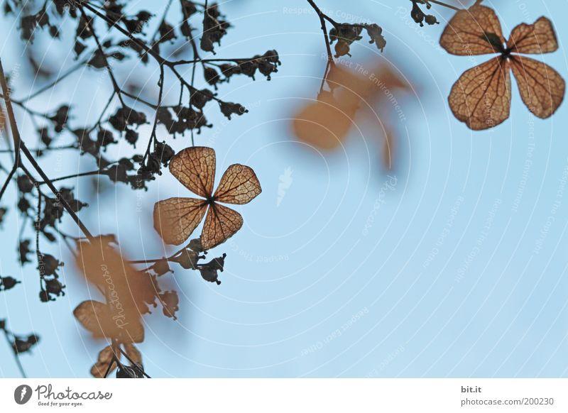 Flatterhaft [LUsertreffen 04|10] Natur Himmel blau Pflanze Blatt Blüte Frühling braun Hintergrundbild Wachstum Romantik Sträucher Dekoration & Verzierung hängen Zweig vertrocknet