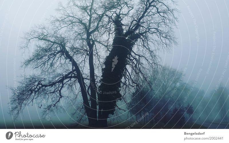 Gloomy Sunday Natur Landschaft Wetter schlechtes Wetter Unwetter Wind Nebel Eis Frost Baum Park Hoffnung Traurigkeit Einsamkeit Angst Verzweiflung Nebelmeer
