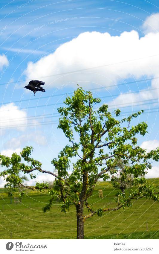 Aufgeschreckt Umwelt Natur Landschaft Pflanze Tier Himmel Wolken Frühling Sommer Schönes Wetter Wärme Baum Gras Blatt Zweig Ast Wiese Wildtier Vogel Flügel