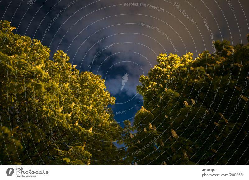 Kastanie Natur Baum dunkel Frühling Angst groß Perspektive Wachstum Wandel & Veränderung Klima Nachthimmel geheimnisvoll Nachtleben Kastanienbaum Leben