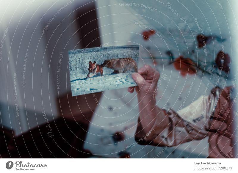 hot-dogs Mensch Frau Hund Hand Fotografie Häusliches Leben Senior Vergangenheit Weiblicher Senior zeigen Haustier Erinnerung Reflexion & Spiegelung haltend Bild-im-Bild