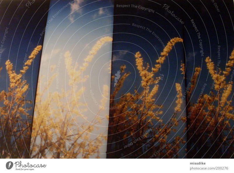 endlich wieder farben. Glück harmonisch ruhig Freiheit Sommer Sonne Garten Umwelt Natur Pflanze Luft Himmel Sonnenlicht Frühling Schönes Wetter Blume Sträucher