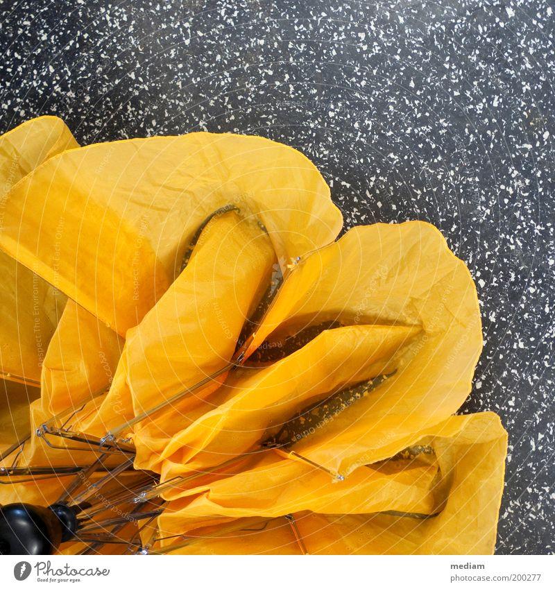 Bonjour tristesse Blume gelb Herbst Blüte Regen trist nass Wassertropfen Bodenbelag Boden Tropfen Stoff trocken Falte Regenschirm Schirm