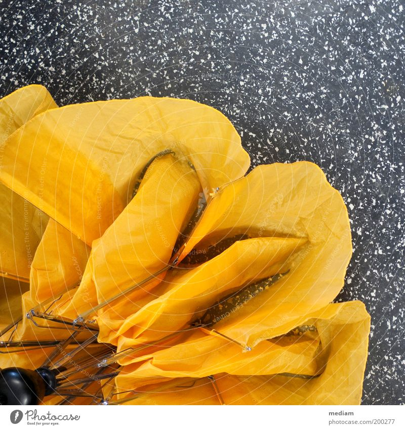 Bonjour tristesse Wassertropfen Herbst schlechtes Wetter Regen Blume Blüte Bodenbelag Regenschirm Schirm Stoffblüten Falte Faltenwurf Nylon Regenschirmständer