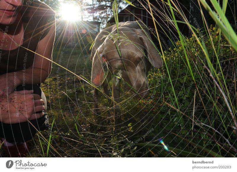 Blaubeerhund Frau Mensch Natur Hand grün Pflanze Sommer Freude Tier Gras Garten Hund lustig Erwachsene Sträucher Freizeit & Hobby