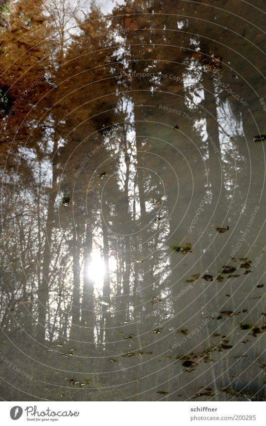 Waldspiegel II Natur Wasser Baum Pflanze ruhig See Umwelt Hoffnung Romantik Schönes Wetter Teich Märchen Reflexion & Spiegelung Unterholz Märchenwald