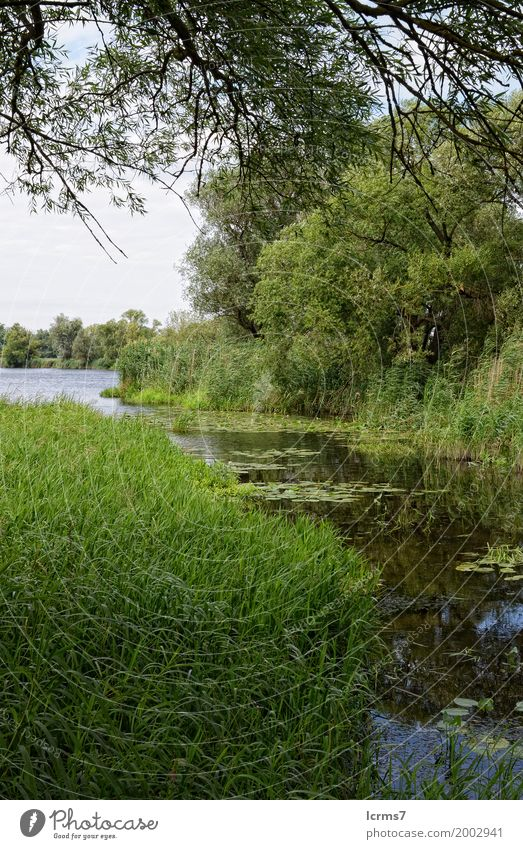 güner See Sommer Natur Klima Brandenburg calm countryside cross day green Havel Havelland havelradweg landscape natural nobody reflection river rural scenery