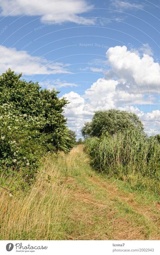 idyllische Landschaft Natur Sommer Deutschland springen Brandenburg Havelland