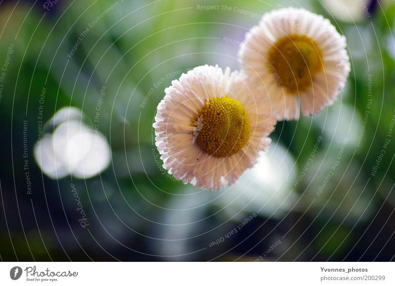 Together schön Sommer Garten Umwelt Natur Pflanze Frühling Blume Gras Blüte Grünpflanze Wildpflanze Park Wiese Blühend Wachstum frisch Kitsch natürlich positiv